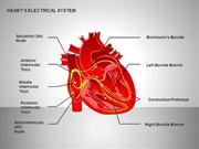 Free Heart's Electrical System for PowerPoint