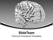 Brain Anatomy PowerPoint Templates PPT Themes And Graphics 0413