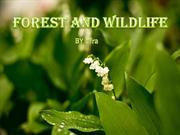 save wildlife and forest