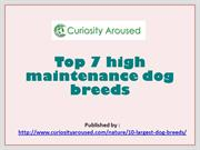 Top 7 high maintenance dog breeds