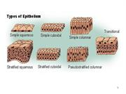 Type of Epithelium