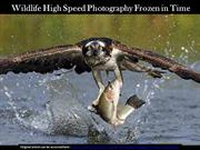 Wildlife High Speed Photography Frozen in Time