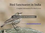 Bird-Sanctuaries-in-India-3973534
