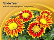 Gazanias Summer Flowering Plant PowerPoint Templates PPT Themes And Gr