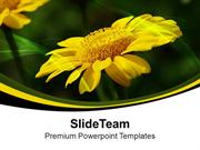 Growing Chrysanthemum Perennial Flowering Plants PowerPoint Templates