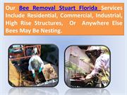 Bee Removal Stuart Florida