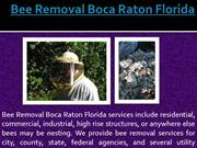 Bee Removal Boca Raton Florida
