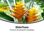 Caribbean With Green Leaves For Nature Theme PowerPoint Templates PPT