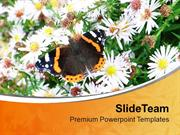 Daisy Flower With Butterfly Nature Theme PowerPoint Templates PPT Them