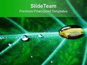Water Drop On Leaf PowerPoint Templates PPT Themes And Graphics 0513