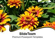 Flowers Beauty Of Nature Abstract PowerPoint Templates PPT Themes And