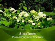 Flowers In Garden Nature PowerPoint Templates PPT Themes And Graphics