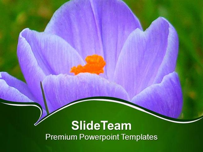 Growing Crocus Spring Flower Powerpoint Templates Ppt Themes And G