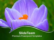 Growing Crocus Spring Flower PowerPoint Templates PPT Themes And Graph