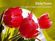 Red Tulips Beauty Of Nature PowerPoint Templates PPT Themes And Graphi