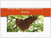 Honey Bee removal service In Florida