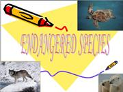 endangered spieces ppt