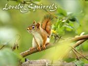 Lovely Squirrels
