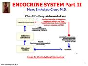 ENDOCRINE SYSTEM Part II