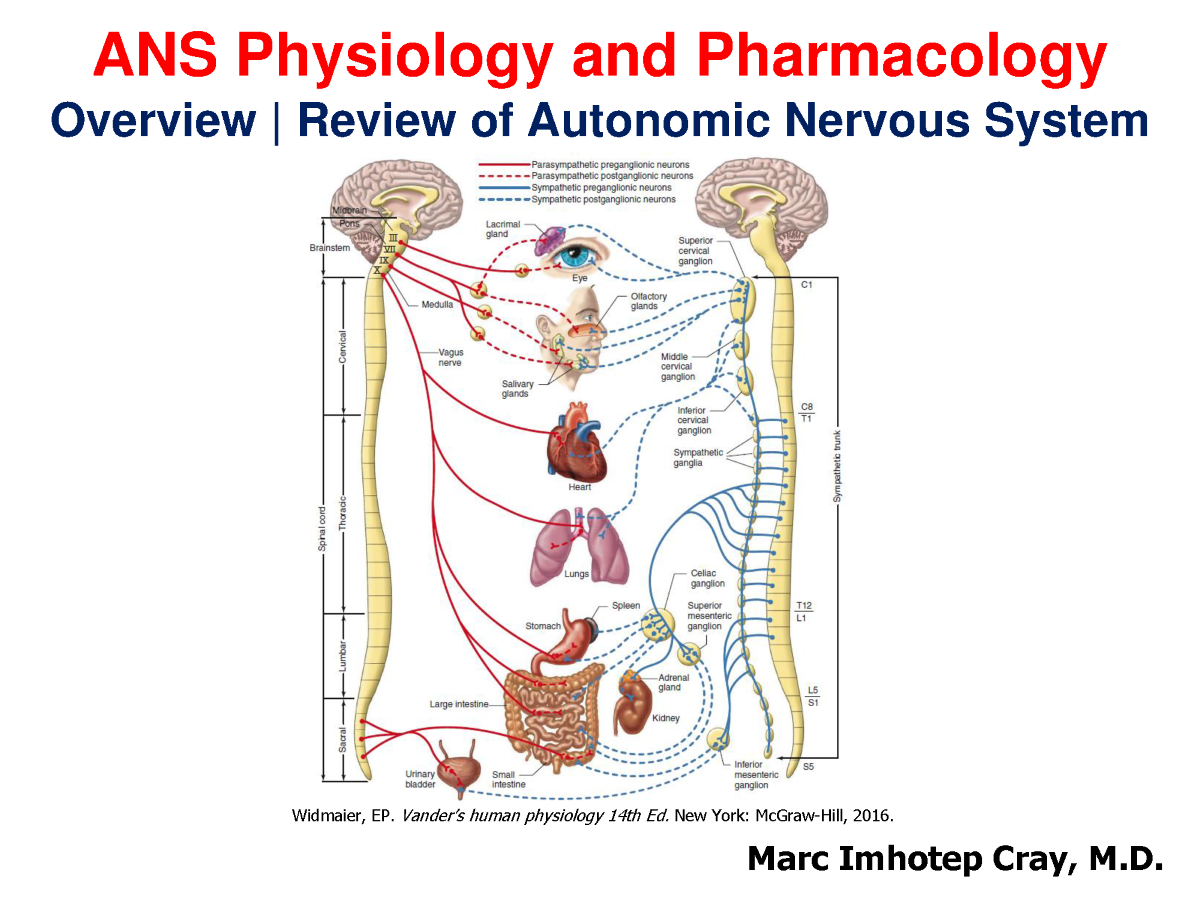 Introduction to the Autonomic Nervous System -EXTENDED |authorSTREAM