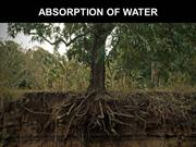 Water absorption in plants