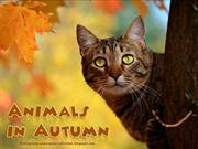 Animals in Autumn (3)