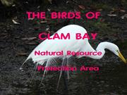 Birds  of  Clam  Bay