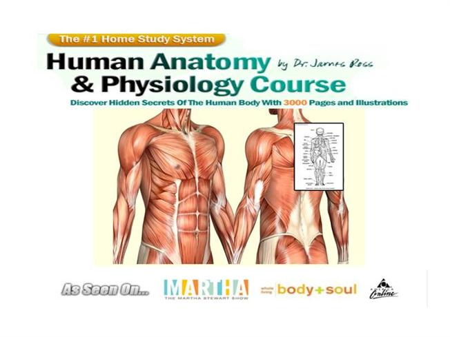Human Anatomy Physiology Study Course Authorstream
