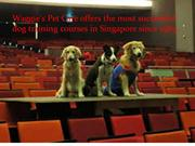 Dog obedience courses in Singapore.