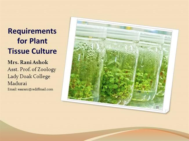 Plant tissue culture a rice plant growing in nutrient rich agar.