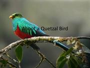 About a Quetzal Bird