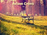 Autumn Colors (14)
