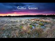 1-Grass3-Cotton Grasses