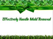 Effectively Handle Mold Removal
