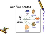 our-five-senses