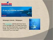 Maduro Dive - Diving vacation packages