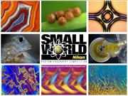 Photomicrography Competition - NSW 2013