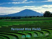 1-Field-Terraced Rice Fields-1