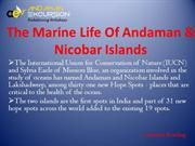 The Marine Life Of Andaman & Nicobar Islands