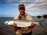 Colorado Fly Fishing Adventure's best guide