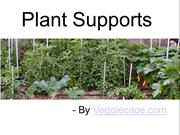 Plant Supports To Maintain Health Of Plants