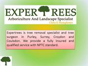 Hire The best Professional Tree Surgeon