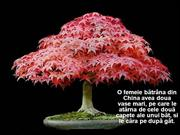 bonsai_lectie_despre_defecte