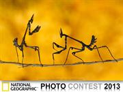 NG Photo Contest 2013  (part1)