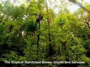 Tropical Rainforests: Goods and Services