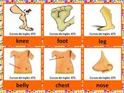 FLASHCARDS - PARTS OF THE BODY