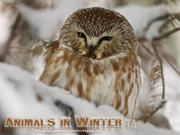 Animals in Winter (7)