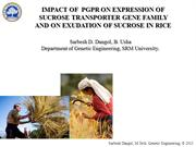 Impact of PGPR on expression of SUT genes and sucrose exudation