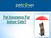 Pet Insurance for Indoor Cats?
