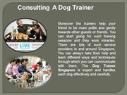 Consulting A best Dog Trainer